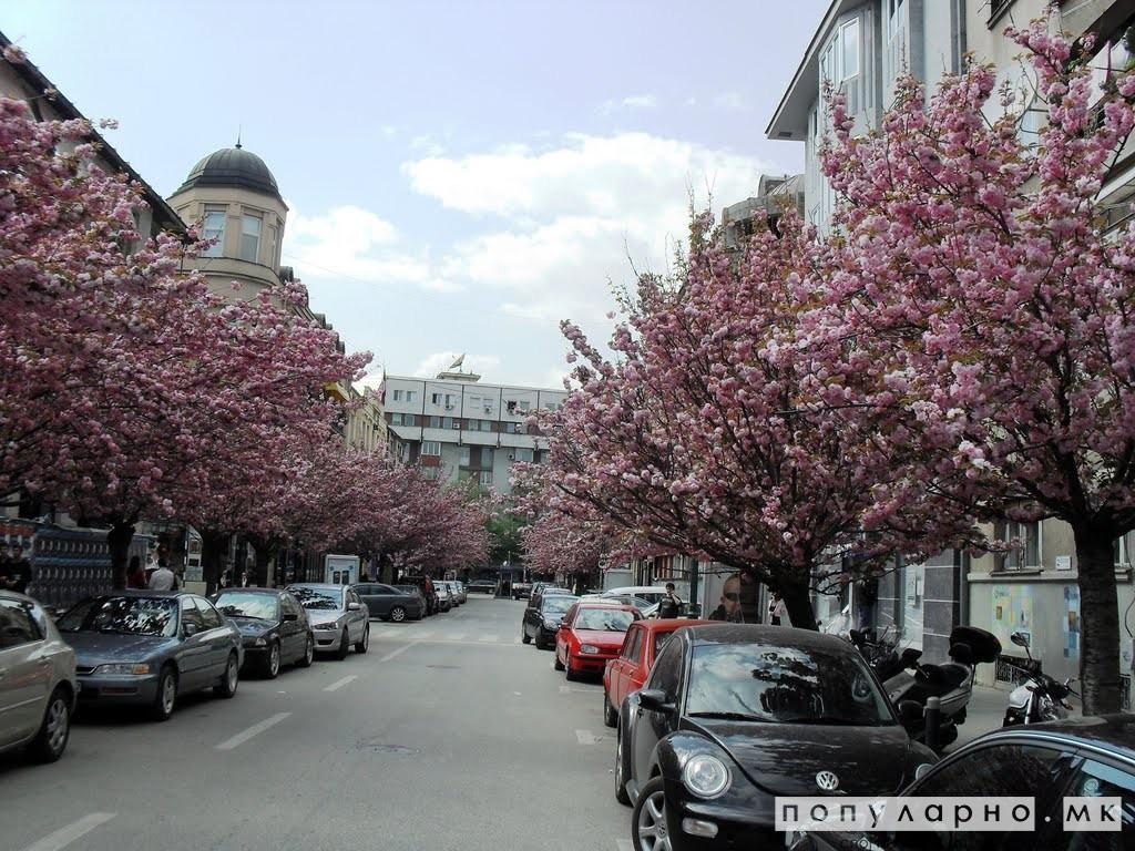 Пристигна пролетта: Сончево време со температура до 15 степени Целзиусови