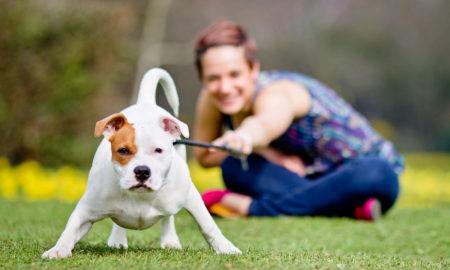 ХРВАТСКА: Од Нова година данок од 100 евра годишно за сопствениците на кучиња