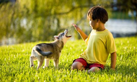 """ИСТРАЖУВАЊЕ: Кучињата можат да """"зборуваат"""" со луѓето"""