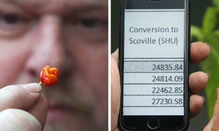 """ХИТ ВО СВЕТОТ: Велшанец прозведе лута пиперка која """"убива"""""""