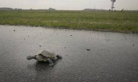 НЕВЕРОЈАТНО: Кога желките мигрираат, се одложуваат авионските летови