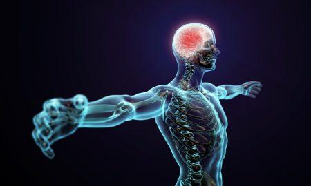 Дваесет факти за човечкото тело кои не сте ги знаеле