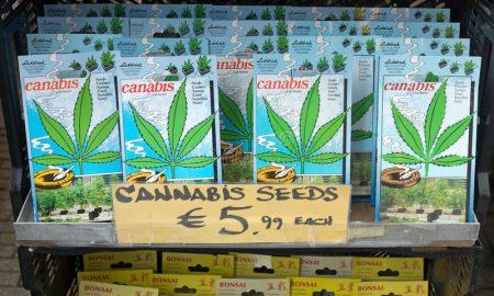 Холандија експериментално ќе одобри легално одгледување канабис