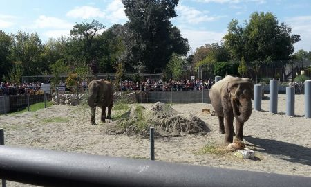 Слониците Дуња и Даела претставени во Скопската зоолошка градина (ФОТО)